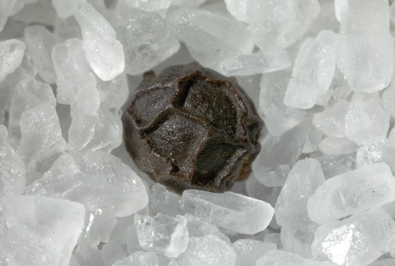 Piper nigrum on sodium chloride landscape • [Gastbeitrag] Blick zurück: Internationaler Handel ohne Online-Shop