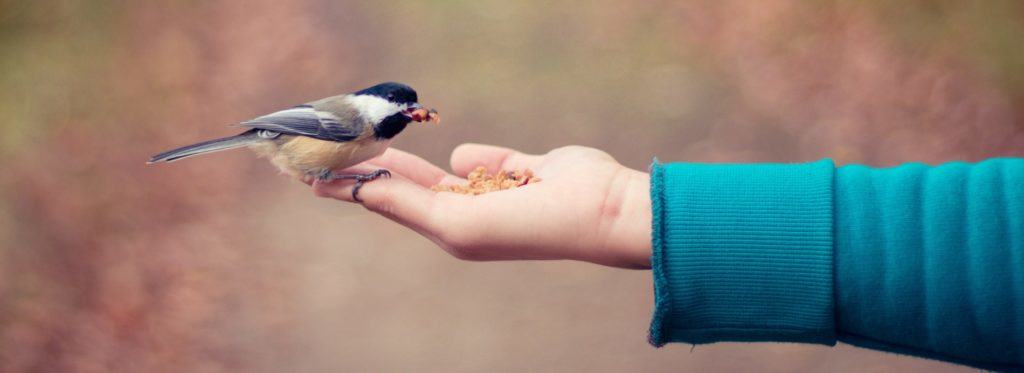 Der Aufbau von Vertrauen ist einer der Schlüsselfaktoren im eCommerce. | Foto: Unsplash