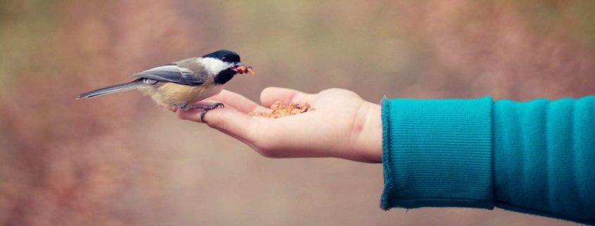bird feeding • Vertrauensbildung im eCommerce: Kein Hexenwerk