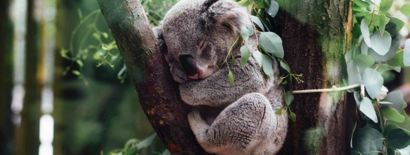 endlich wieder ruhig schlafen • Endlich wieder ruhig schlafen: So sicherst du deine WordPress-Seite [UPDATE]