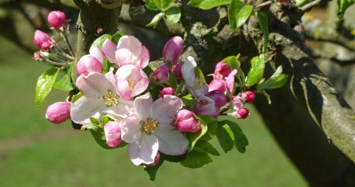SEO-Tipps für Gartenblogger