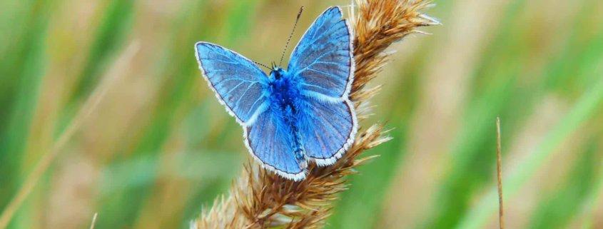 Womit lockt man Schmetterlinge, ähem, Kunden an? | Foto: Unsplash